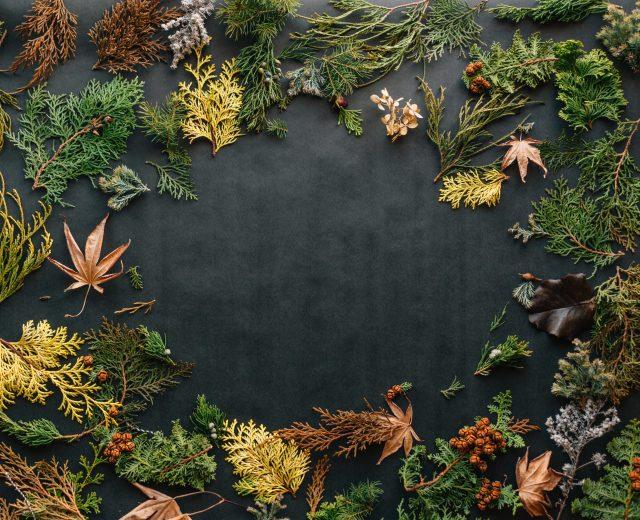 Thanksgiving-desktop-wallpaper-erol-ahmed