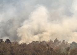 Brasilien: Rovdrift og klimaforandringer fører til flere skovbrande i år