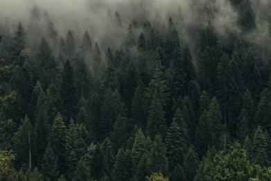 Övergång till molnbaserade tjänster kan minska koldioxidutsläppen med 60 miljoner ton per år 1