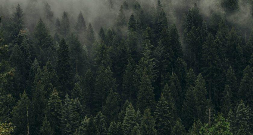 Övergång till molnbaserade tjänster kan minska koldioxidutsläppen med 60 miljoner ton per år