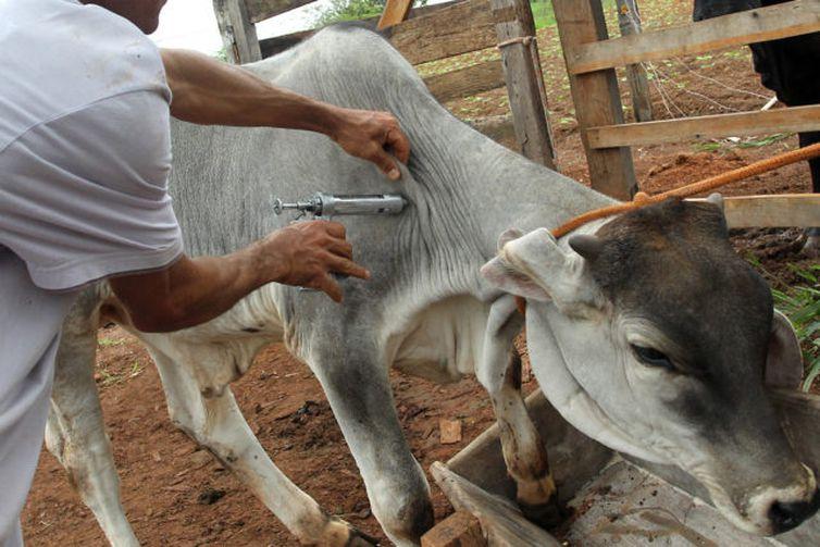 Vacinação contra a aftosa prorrogada até 30 de junho