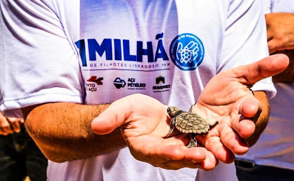 Projeto alcança marca de 1 milhão de filhotes de tartarugas marinhas soltos no mar do RJ