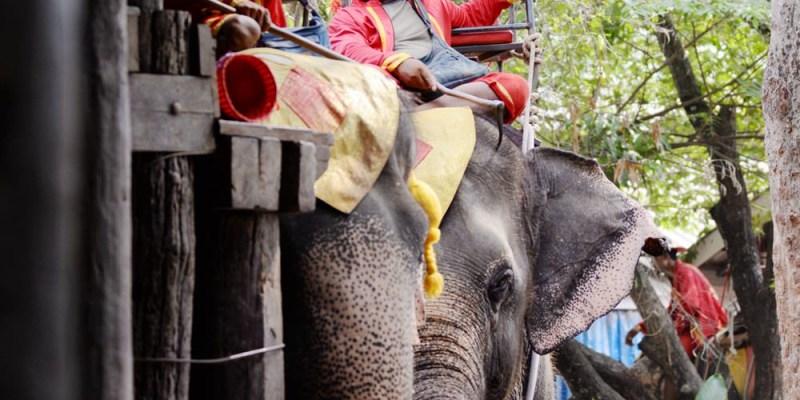 泰國一日遊行程|丹嫩莎朵大象村Chang Puak Camp 餵大象吃芭蕉