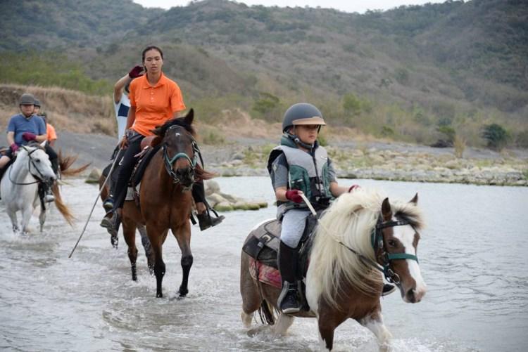 《悠客論馬》12~14歲的中老年馬,母馬會比公馬乖嗎?