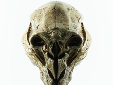 Gecco_TAODQ_Spartan_Skull