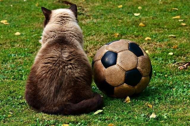 Accessori gatto