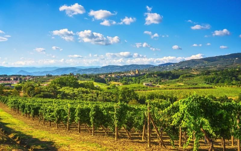 Vinci, sangiovese vineyards and village on background. Florence, Tuscany Italy