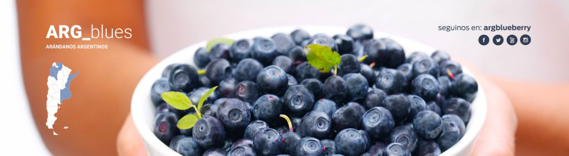 Argentina blueberries mirtillo