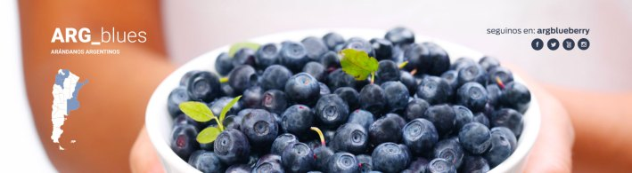 Argentina blueberries mirtillo