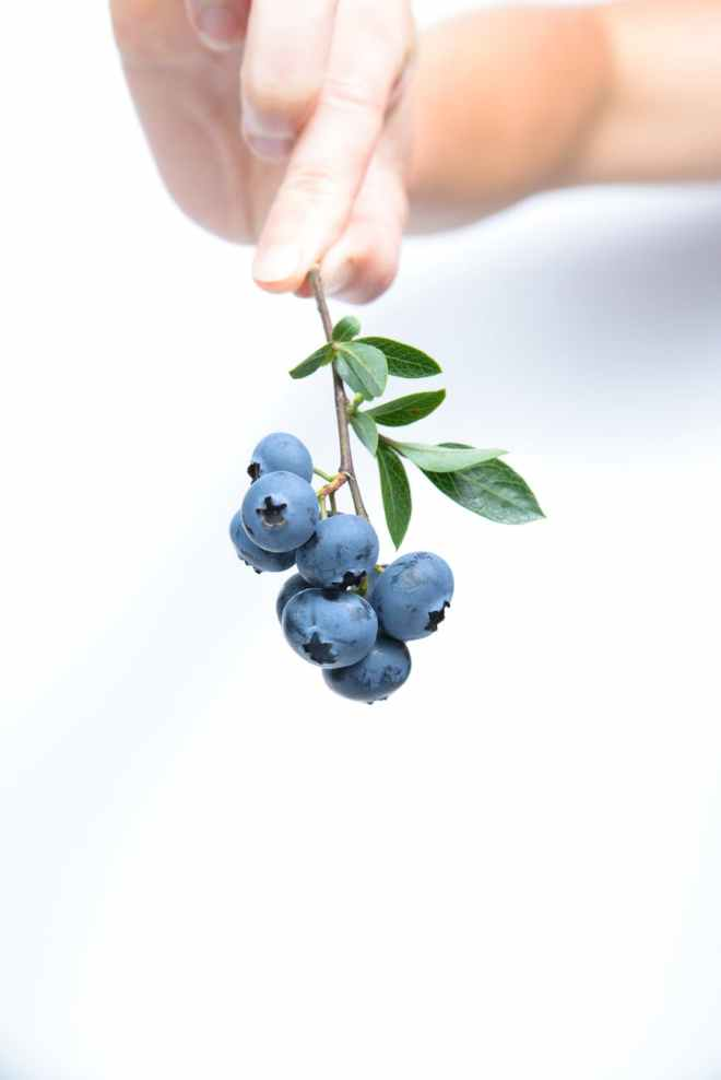 blue fruit blueberry