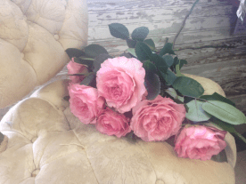 cabbage roses on chair