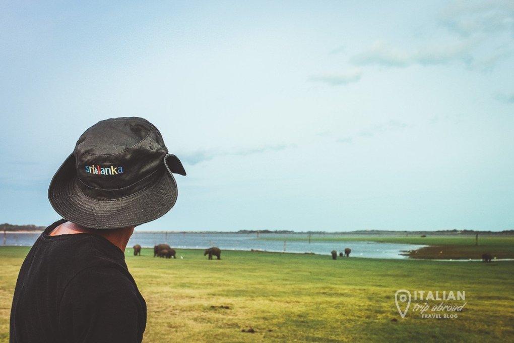 Sigiriya Safari - Kadulla National Park - Wild Elephants Safari
