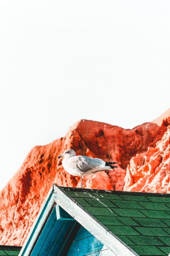 Scenes from Faro Portugl - Seagull in Faro
