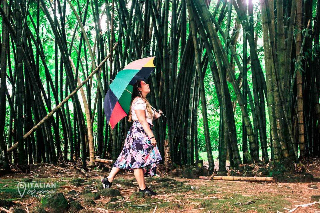 Kandy Royal Botanic Garden-5
