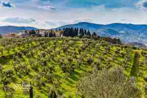 Vineyard and hills in Puglia, Italy - Visit Apulia olive oil production
