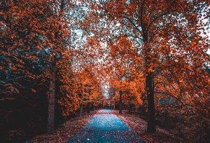 Gorgeous autumn colours in Europe