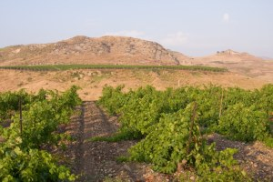 100062250-Sicilian vineyards