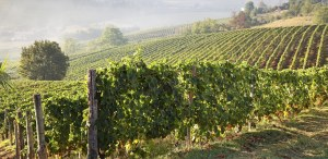 178490461-Astigiano vineyards, Piedmont