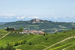 186497374-Langhe hills and vineyards