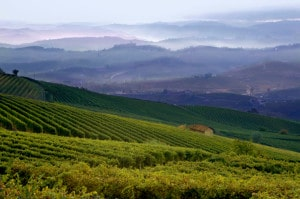 477981209-Langhe hills and vineyards