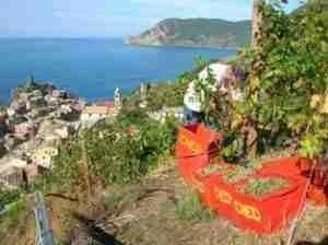 Ecotourism in the Cinque Terre