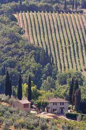 Wine Routes in Tuscany
