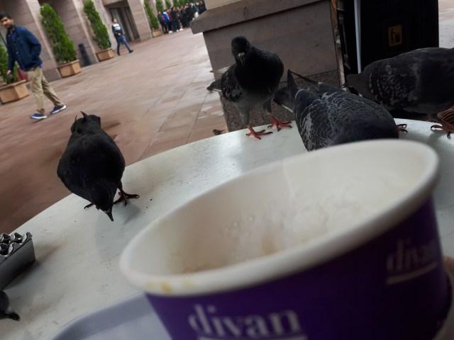 güvercinler le colombe.jpg
