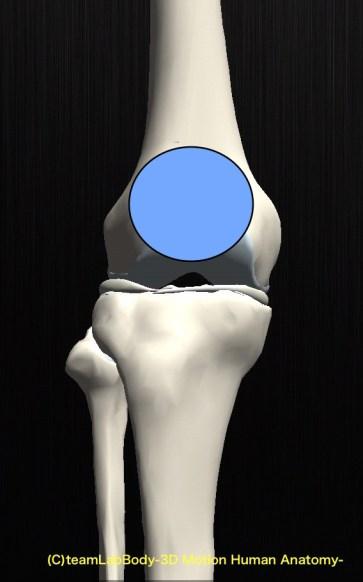 膝蓋骨高い