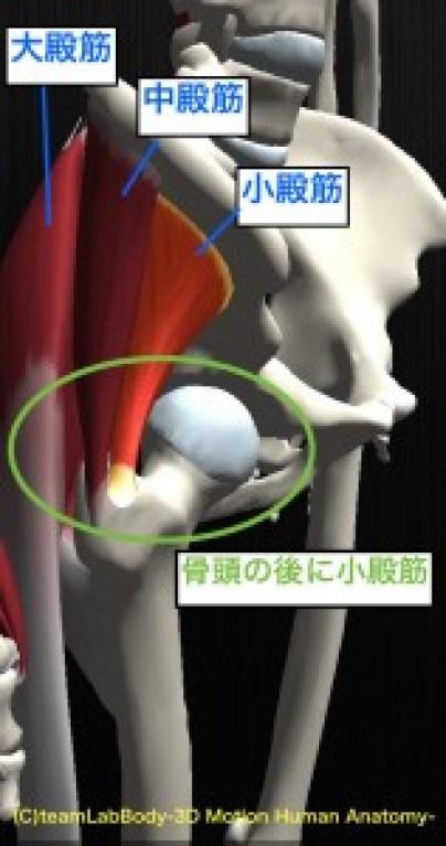 殿筋 骨頭位置