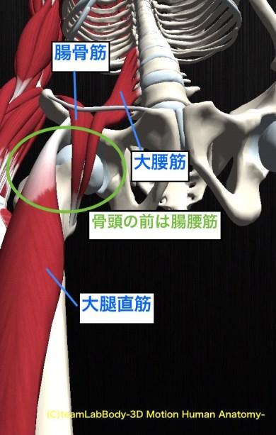 屈筋 骨頭位置関係