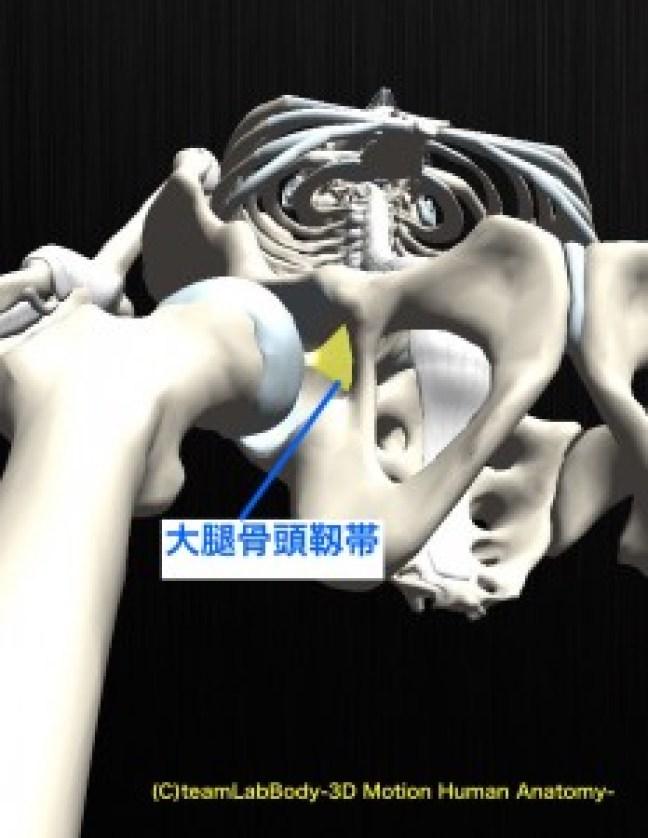 大腿骨頭靱帯 下