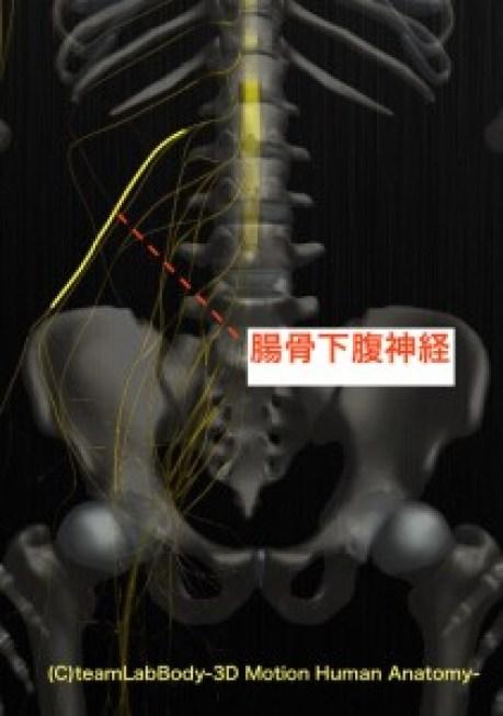 腸骨下腹神経