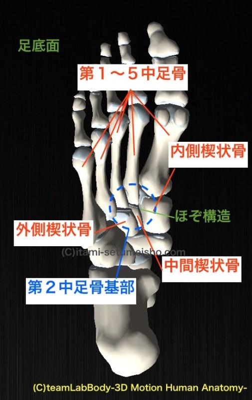 第2中足骨基部