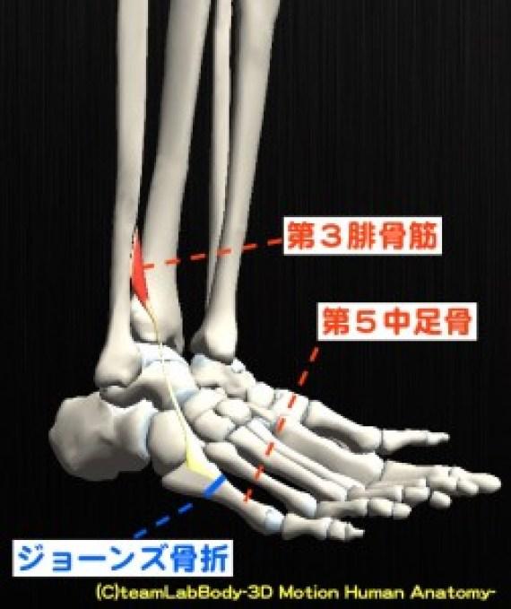 第3腓骨筋