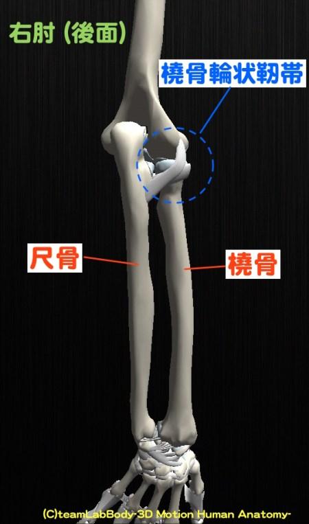橈骨輪状靭帯