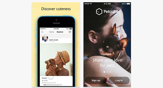Petcube - Instagram для любителей домашних животных