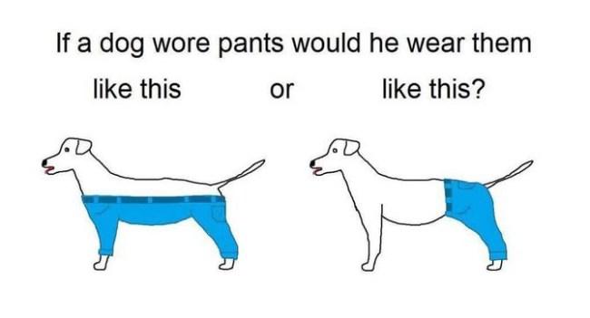 В интернете горячо дискутируют о том, каким образом собаки должны носить брюки
