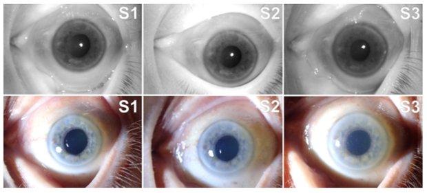 Мертвый глаз может успешно пройти сканирование радужной оболочки