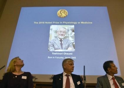 Нобелевская премия по медицине присуждена за изучение «самопоедания» клеток