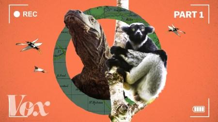От классического формата к уровню «голливудских блокбастеров»»: авторы сериала «Планета Земля II» рассказали, как менялись технологии съемки живой природы последние 15 лет