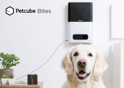 Устройство Petcube Bites от стартапа с украинскими корнями выиграло премию Product Hunt, обогнав The Boring Company Илона Маска