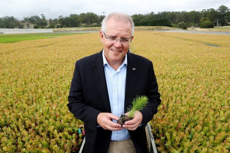 К 2050 году в Австралии высадят миллиард деревьев