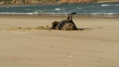 Новозеландские исследователи разыскивают владельца флэшки, которую они извлекли из… ? морского леопарда. Образец больше года пролежал в морозилке, но флэшка сохранила работоспособность