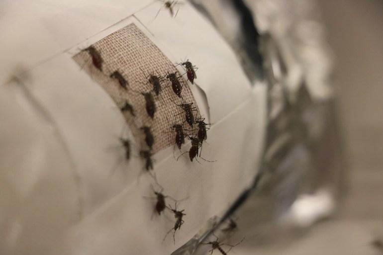 Графеновая пленка защитит от комариных укусов