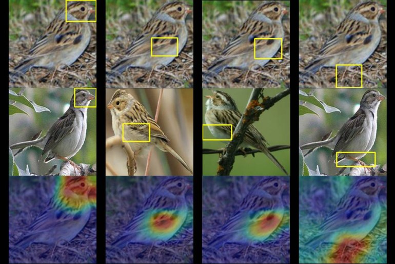 Американские инженеры разработали систему распознавания... птиц