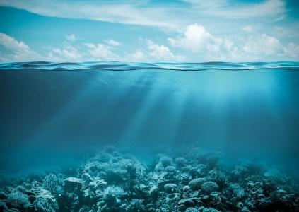 Исследователи нанесли на карту почти пятую часть дна мирового океана