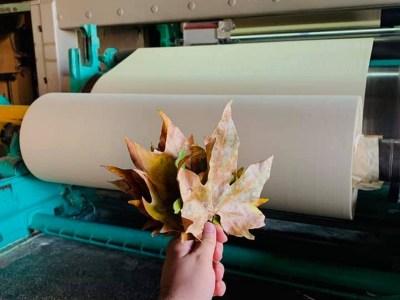 Украинский создатель бумаги из опавших листьев RE-leaf PAPER выпустил первую промышленную партию бумаги объемом 1,5 тонны [видео]