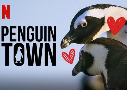 «Місто пінгвінів» / Penguin Town: ситком з життя південно-африканських пінгвінів