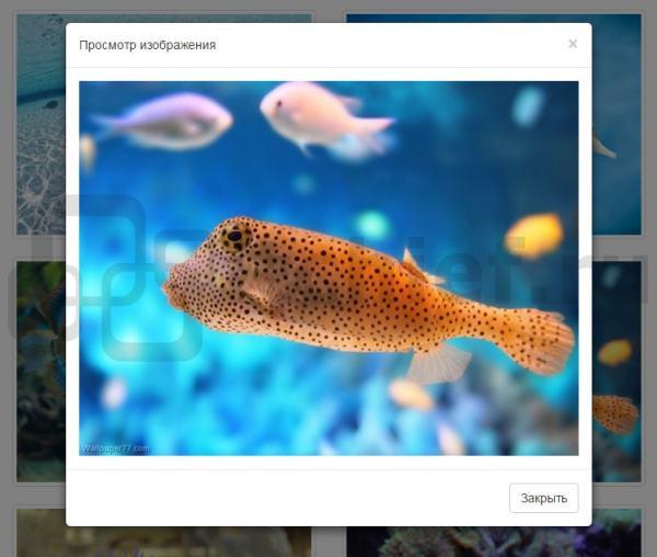 Bootstrap 3 - Компонент Thumbnails (Миниатюры) | ИТ Шеф