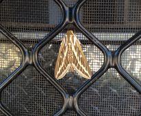 Beasley River moth